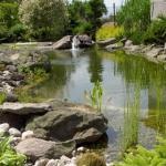 F kopčanskem ribníčku