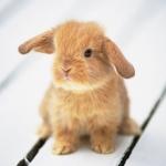 Ja jsem ten zajíček nešťastný