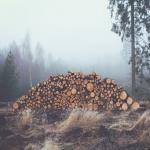 Surové drevo