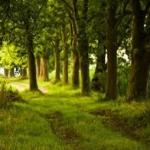 F tom kalinovom lese