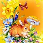 Na zelenej lúke sedí zajac