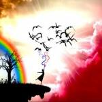 Takto letia vtáci